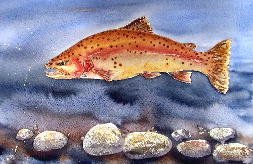 Brown Trout by Sue Graham
