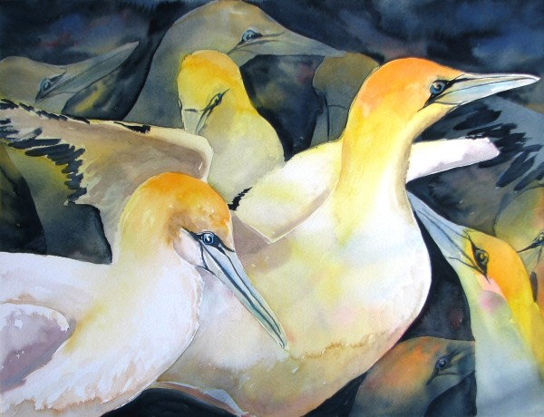 Gannet Flock by Sue Graham
