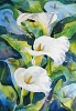 Arum lilies painting by Sue Graham