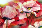 Red Poppies by Sue Graham