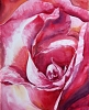 Zoom Rose painting by Sue Graham