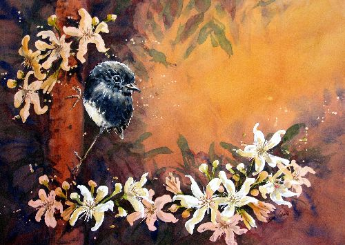New Zealand Robin by Sue Graham